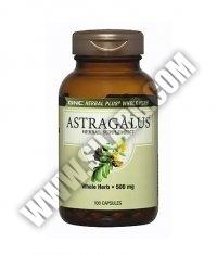 GNC Astragalus 500mg. / 100 Caps.