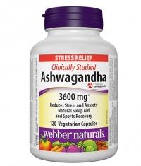 WEBBER NATURALS Ashwagandha / 120 Vcaps