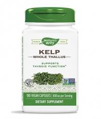 NATURES WAY Kelp Whole Thallus 600 mg / 180 Caps