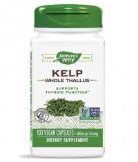 NATURES WAY Kelp Whole Thallus 600 mg / 100 Caps